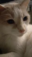 340/365 (agirlnamednee) Tags: 365 fauna cat leon