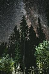 stars over treetops (R A M A L A M ▲ S A M D O N G) Tags: