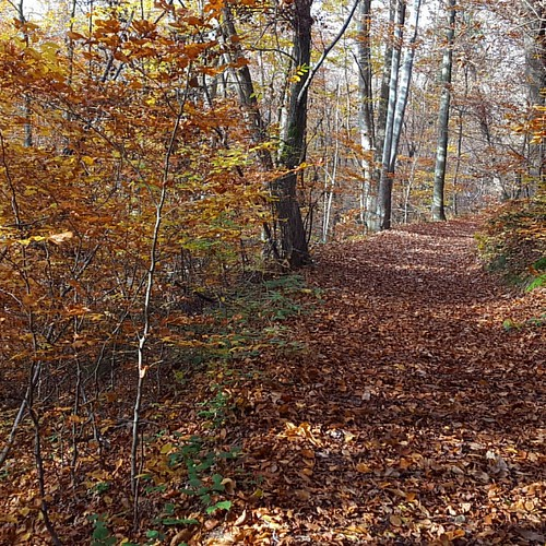 A walk in the autumn woods. #sloveniaincognita