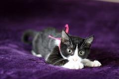 Patik (SaRDeS70) Tags: patik cat kedi