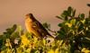 Caught You! (jaron711) Tags: jayshots bird watcher natuer nature world travel tamron nikon wildlife