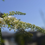Flowers Blossoming thumbnail