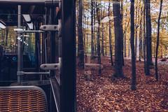Tram 44 through Tervuren Park (tanjatiziana) Tags: belgium brussels bruxelles tervuren autum tram 44 publictransit forest leaves