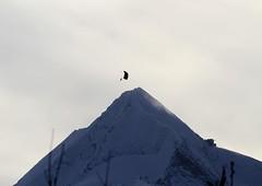 IMG_9108 (Christandl) Tags: kitzsteinhorn paragleiter berg pinzgau sterreich