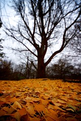 Near of Sight (color) (Sine--Qua--Non) Tags: fall winter landscape nature outdoors park indianapolis indy indiana sonya77 slta77 sigma816 wideangle uwa tree trees