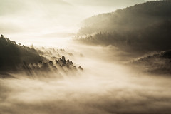 breaching (Dennis_F) Tags: fog mist misty autumn hills germany landscape sunlight tree forest palatinate sunrise sun light shadow