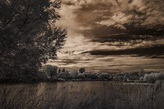 Cloudy Skies Over Lindo Lake (Bill Gracey) Tags: ir infrared infraredphotography convertedinfraredcamera lindolake clouds sky trees highcontrast nature naturalbeauty surreal