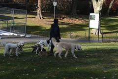 dog walk, Central Park, NYC _DSC0105-104ND800 (horstg1) Tags: dogwalk dogs centralpark ny nyc newyorkcity