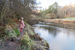Peebles-16120431 (Our Dream Photography (Personal)) Tags: autumn countryside haylodgepark leelive neidpathcastle ourdreamphotography peebles river rivertweed scottishborders tweeddale walk winter woodland gutterbluid wwwourdreamphotographycom