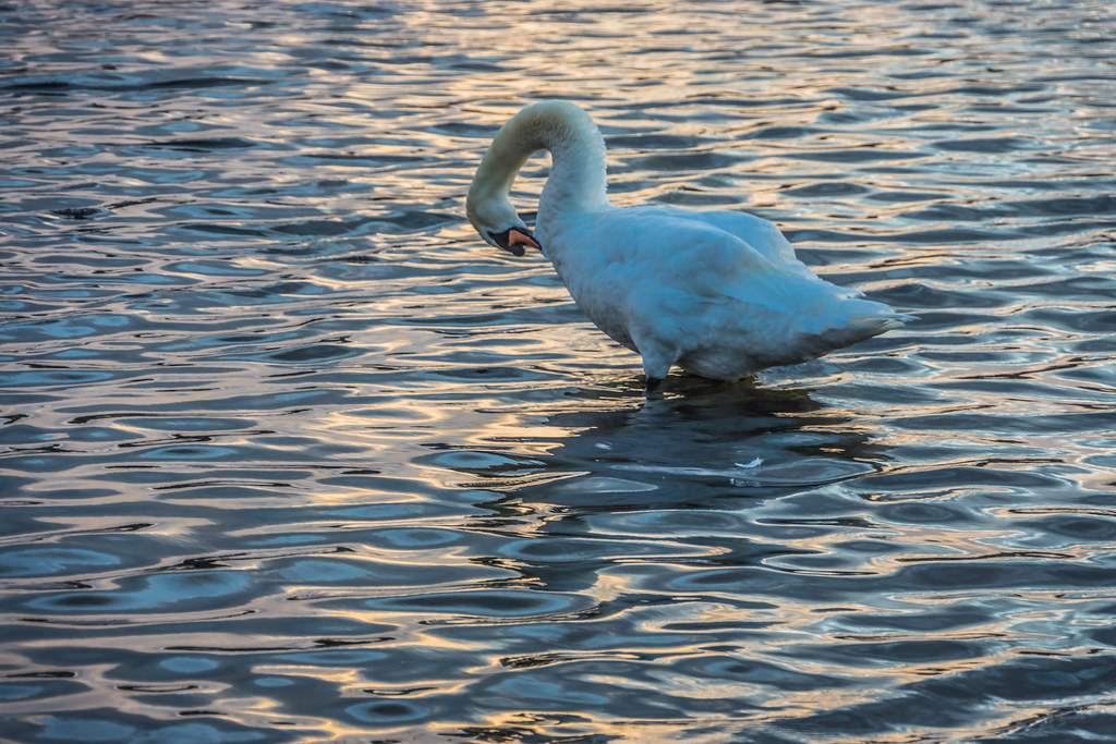 SALMON WEIR AREA GALWAY [RIVER CORRIB] REF--107574