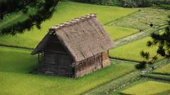 Campos de arroz (a m a n e c e) Tags: verde casa japon campos arroz choza 2014