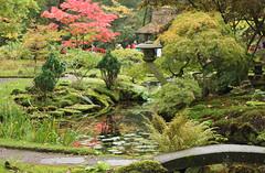 japanse tuin okt 2015 02 (gabrielgs) Tags: autumn colors japanese japanesegarden forrest herfst thenetherlands denhaag bos thehague clingendael japansetuin