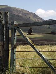 Avistando (vero_wiesner) Tags: paisaje sierra tranquera pjaro