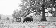 Hatfield_Forest-51 (Eldorino) Tags: park uk morning autumn trees nature forest sunrise landscape countryside nikon britain centre jour hatfield bishops stortford essex hertfordshire stanstead hatfieldforest