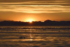 _DSC8646 (TC Yuen) Tags: glacier arctic greenland whales iceberg crusing floatingice polarregion greenlandeast