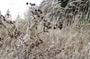 belonging to the wind // vermont (Photos in a Jar) Tags: winter ilovenature vermont naturallight northeastkingdom thewind barrhill inthewind