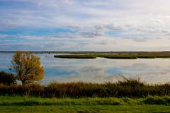 _DSC0139 (durr-architect) Tags: lake water dike almere oostvaardersplassen oostvaardersdijk