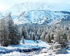 Woke up to Snow, Yosemite NP 5-15 (inkknife_2000 (6.5 million views +)) Tags: california usa snow mountains landscapes yosemitenationalpark snowontrees tuolumneriver tiogapassroad easternsierranevada snowonmountains cahwy120 dgrahamphoto