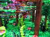 IMG_6860 (Festi'briques) Tags: montagne dragon lego exposition fantasy hotdogs jeu caverne fantastique auxerre 2015 scoubidou festibriques