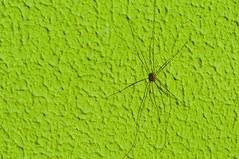 20151121-DBG_1670.jpg (guddb) Tags: wall spider wand spinne glas aluminium sunnyday
