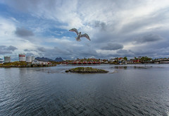 Seagull, Svolvr, Lofoten (cpphotofinish) Tags: ocean blue autumn light sunset sky panorama mountain color colour reflection fall water weather norway clouds canon landscape outside island eos daylight norge photo reflex day skies foto bright image harbour outdoor seagull n panoramic norwegian nordic dslr scandinavia canondslr lofoten havn bilder vann bluelight skyer kaia hst hurtigruten landskap bilde svolvr norske farger mk3 nordland skandinavia svinya rorbu f4l canonef mse ef1740mmf4lusm carstenpedersen canonmkiii mklll canon5dmk3 eos5dmk3 verdensvakrestesjreise cpphotofinish canonredlable
