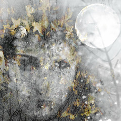 """And now in autumn time ... I leave you but return to you. When you see my power fade and the leaves fall from the trees. When snow obliterates like death and all traces of me upon the Earth, then look for me inside the moon ..."" (virtually_supine) Tags: moon ice nature face collage illustration photomanipulation frost seasons creative monotone textures montage fallingleaves change layers baretrees digitalartwork filllight lateautumn selectedcolour picasa3 cheflance photoshopelements9 verbalandvisual wiccaoldreligionforanewagebyviviannecrowley theapproachofwinter wiccanimagery amgmixmasterchallengeno3"