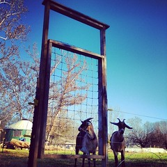Gate. I built that. #farmlife #farmgirl... (francescafury) Tags: construction farmlife farmgirl fuckyeah uploaded:by=flickstagram girlsusetools instagram:photo=617528311206271353144513221