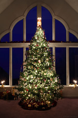 Photographing the Christmas Tree during the Blue Hour (Bryan Carnathan) Tags: christmas nightphotography winter night wideangle christmastree indoors bluehour merrychristmas christmastreelights gitzotripod phototips longexposurephotography photographytips acratechballhead canoneos5dsr bryancarnathan zeissmilvus35mmf2lens