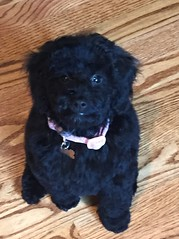 ruby-red-and-mavericks-little-girl-ella-belle-after-her-bath-and-grooming_18506100794_o