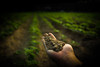 OurLand | Building the new food economy (Dari_Extension) Tags: soil land agriculture surce