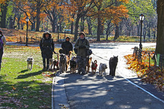 Central Park's Dog Walkers Might Well Hold Records for Highest Number of Dogs at Once (travelmag.com) Tags: newyork manhattan city building centralpark dog walkers