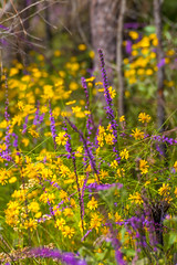 Purple & Yellow (hetrickwesley) Tags: florida gainesville morningside nature outdoors park center flowers butterfly unitedstates us yellow purple canon 80d tamron 70300 di vc