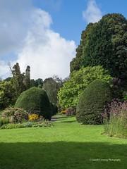 Clyne Gardens 2016 09 30 #6 (Gareth Lovering Photography 3,000,594 views.) Tags: clyne gardens botanical swansea wales flowers trees shrubs park olympus stylus1s garethloveringphotography