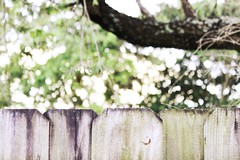 Focus (Acqua di Gioia) Tags: bokeh dof depthoffield hbw happybokehwednesday fence outdoor green nature wood sunlight tree light