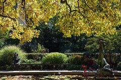 A Golden Canopy over a Secret Garden (CVerwaal) Tags: autumn centralpark conservatorygarden sculpture newyork ny usa secretgarden sonyrx100iii