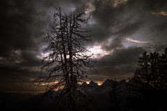 Evening Fire (bandit4czm) Tags: lechtal baum tree sunset hornbachkette bergwald mountain autumn herbst