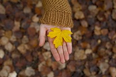 Autumn Gold (CoolMcFlash) Tags: leaf leaves autumn fall hand woman pullover focus canon eos 60d holding tamron a007 2470 dof depthoffield blatt laub herbst autumnleaves flickrfriday frau fokus halten tiefenschrfe fotografie photography