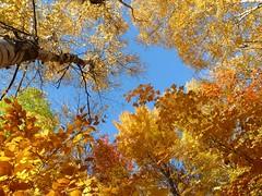 Dlice  d'automne (Amiela40) Tags: automne jaune yellow couleur color color autumn feuilles leaves