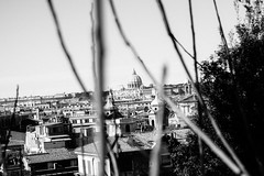The Vatican (lorenzoviolone) Tags: agfascala200 bw blackwhite blackandwhite buildings cityscape d5200 dof landscape monochrome towers vsco vscofilm vaticancity basilica bushes churches clearsky depthoffield dome domes nature shallowofdepth sky skyline stpeter stpetersbasilica stpetersdome sticks streetphoto streetphotobw streetphotography vatican walk:rome=march2016 roma lazio italy