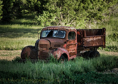 Light and Shadows (HTT) (13skies) Tags: htt truck happytruckthursday thursday sitting abandoned alone old relic antique rusted beatup rustbucket sony highway5 osbornecorners
