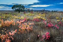 Paleta de pintor (LANTADA) Tags: hdr paisaje color arbol tamaradecampos majuelo iglesia otoo viedo otoo viedo