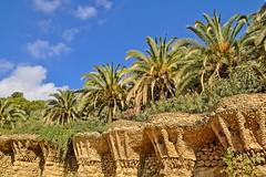 Park Güell, Barcelona (yonca60) Tags: parkgüellbarcelona spain gaudi palmtrees palmiye park barcelona parkgüell sky nature bluesky