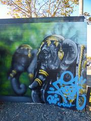 Street Elephants (Steve Taylor (Photography)) Tags: animal art graffiti mural streetart gravel newzealand nz southisland canterbury christchurch cbd city tree dtr crew freak elephant indian