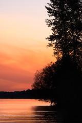 Sunset (Objects1000) Tags: tamron150600mm colorful nikon sunset colorfulsky nature water landscape colors lake orangesky nikond750 silhouette lakewashington seattle washington unitedstates us