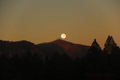Mt. Elden Supermoon (aurora borealis lover1555) Tags: supermoon nau mtelden sunset moonrise alpenglow dusk lastlight werewolves flagstaffmoon arizonamoon