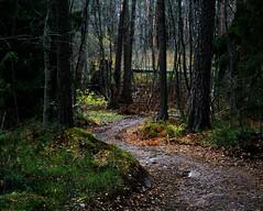 A way into wilderness, Helsinki, Finland, October 2016 (Juha Riissanen) Tags: kruunuvuori finland helsinki forest path wilderness winding trees nature natural moss gravel