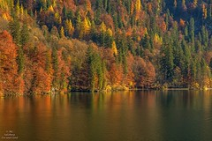Herbstliche Lichter Stimmung am Knigssee Berchtesgadener Land (Salzburg Zoo und Land) Tags: knigssee berchtesgadenerland berchtesgaden salzburg natur landschaft see herbst berge wasser tourismus bayern nachbarschaft