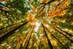 IMG_3300 (serj k.) Tags: fall autumn 7d mark ii