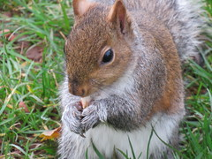 """"""" Nutty Nibbler """" (seanwalsh4) Tags: 7dwf sunday fauna sean walsh nature nuts furry bristol castle park"""