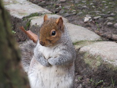 """ Who Me "" (seanwalsh4) Tags: funny happy joke smile fun sean walsh bristol nature wild nutty nuts nut hazelnut"